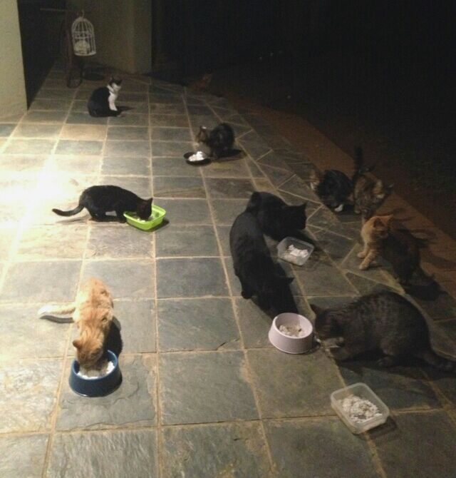Ferals gathering for a meal