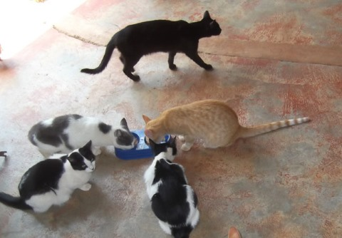 Sanctuary cats enjoying an afternoon snack