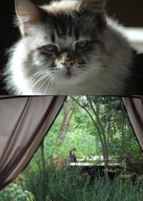 Fia, a beloved feline companion