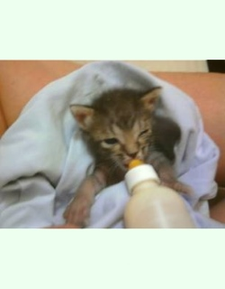 Helping carers foster and home kittens